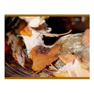 Fallen Leaves floating down stream Postcard