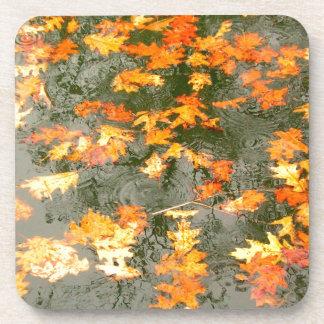 fallen leaves in rain coasters