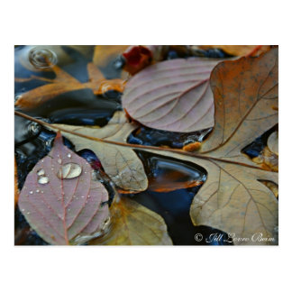 Fallen Leaves on Pond Postcard