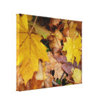 Fallen Maple Leaves Yellow Autumn Nature Canvas Print