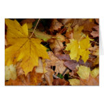 Fallen Maple Leaves Yellow Autumn Nature Card