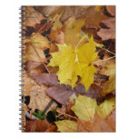 Fallen Maple Leaves Yellow Autumn Nature Notebook