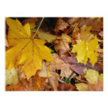Fallen Maple Leaves Yellow Autumn Nature Photo Print
