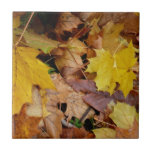 Fallen Maple Leaves Yellow Autumn Nature Tile