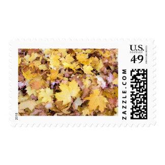 Fallen Maple Tree Leaves Pile in Backyard Stamp
