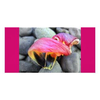 Fallen Petals Photocard Card