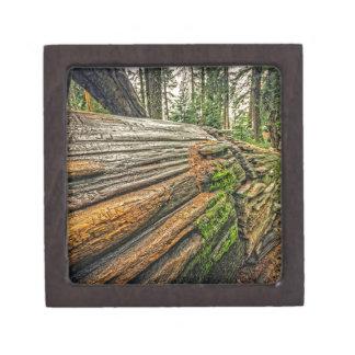 Fallen Redwood Keepsake Box
