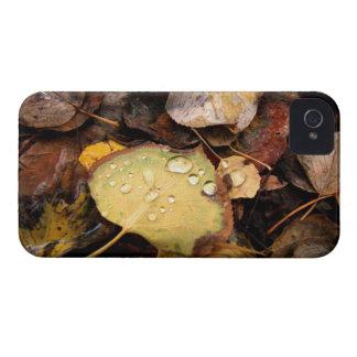 Fallen Splendor iPhone 4 Case-Mate Cases