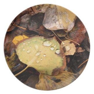 Fallen Splendor Melamine Plate