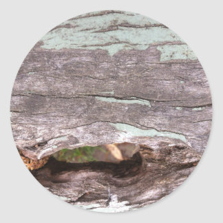 Fallen sun bleached tree with hollow point classic round sticker