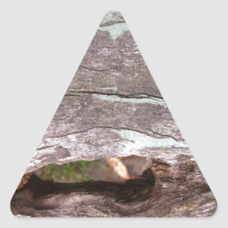 Fallen sun bleached tree with hollow point triangle sticker