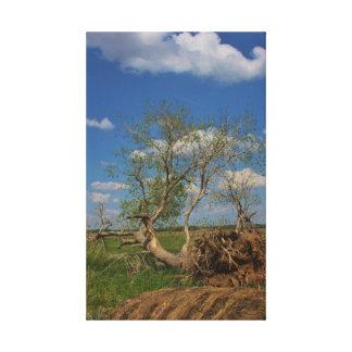 Fallen Tree canvas photo