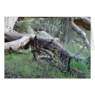 Fallen Tree Card