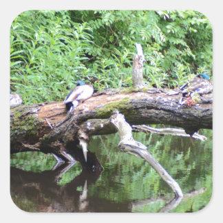 Fallen Tree Duck Perch Square Sticker