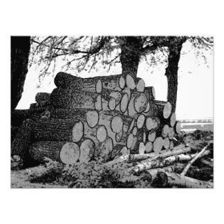 Fallen tree trunks in a pile photo print