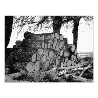 Fallen tree trunks in a pile photograph