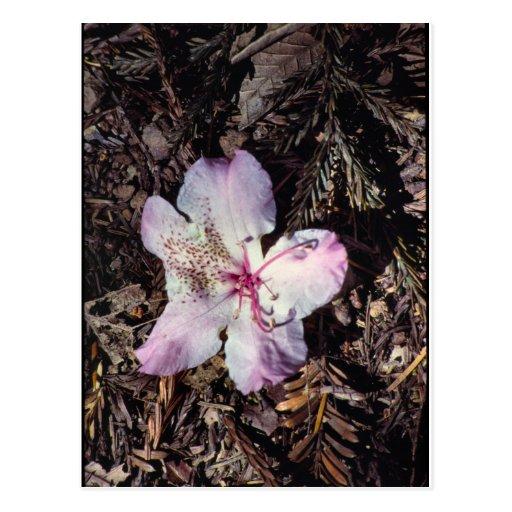 FallenBlossom Tarjetas Postales
