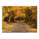 Falling Leaves | Autumn Home Gifts Postcard