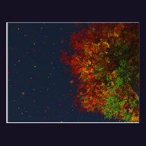 Falling Rainbow Postcard