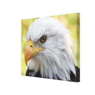 Falln Bald Eagle Liberty Canvas Print
