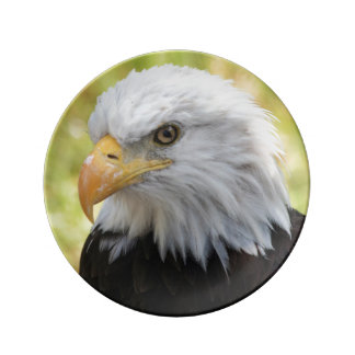 Falln Bald Eagle Liberty Dinner Plate