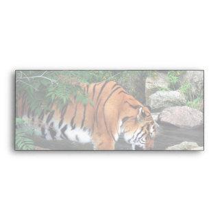 Falln Drinking Tiger Envelope