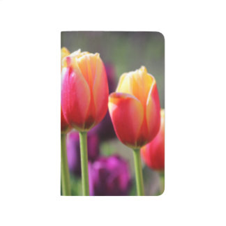 Falln Tulips Aflame Journal