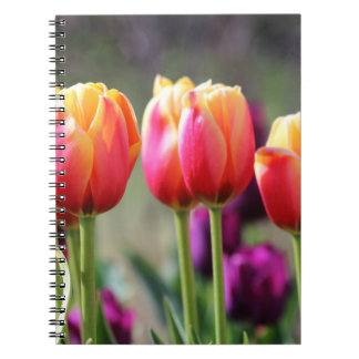 Falln Tulips Aflame Notebook