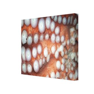 Falln Up Close Octopus Canvas Print