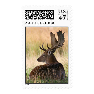 Fallow Deer Buck Laying in Grass Postage
