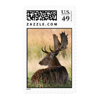 Fallow Deer Buck Laying in Grass Stamps