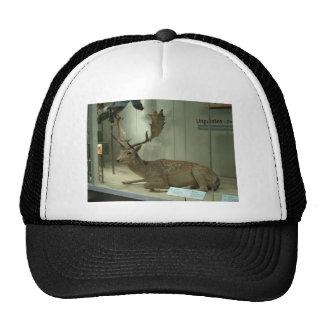 Fallow deer (Dama dama) Hat