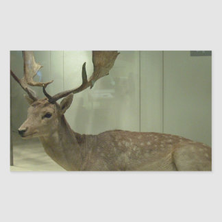Fallow deer (Dama dama) Rectangular Sticker