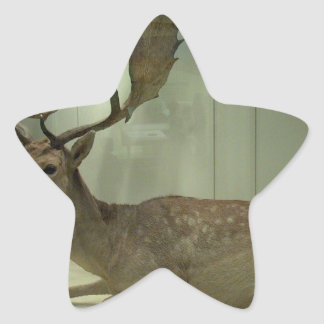 Fallow deer (Dama dama) Star Sticker