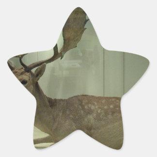 Fallow deer (Dama dama) Star Sticker