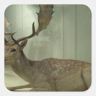 Fallow deer (Dama dama) Square Sticker