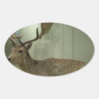 Fallow deer (Dama dama) Oval Sticker