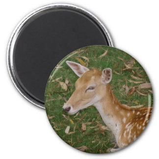 Fallow Deer 2 Inch Round Magnet