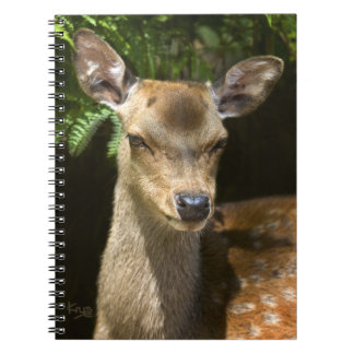 Fallow Deer Notebook