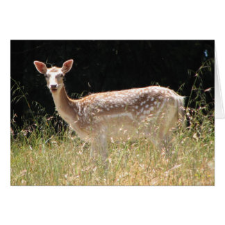 Fallow Deer Notecard Stationery Note Card