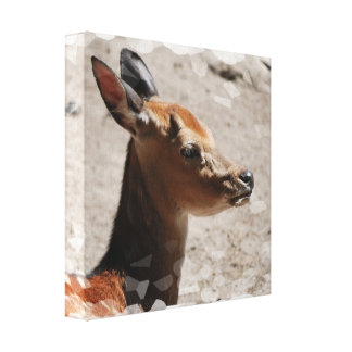 Fallow Deer Profile  Canvas Print