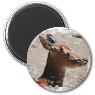 Fallow Deer Profile  Magnet
