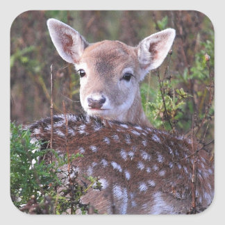 Fallow deer square sticker