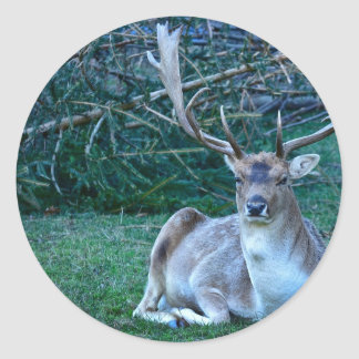 Fallow Deer - United Kingdom Classic Round Sticker