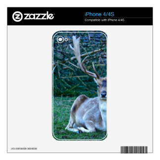 Fallow Deer - United Kingdom Decal For The iPhone 4S