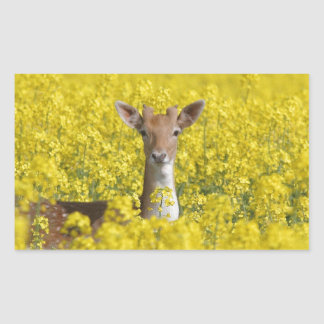 Fallow in yellow rectangular sticker