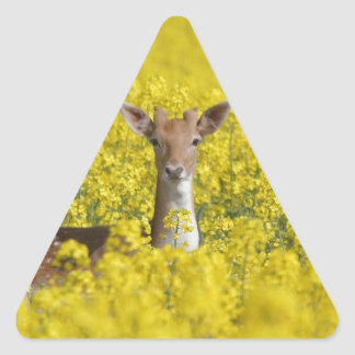 Fallow in yellow triangle sticker