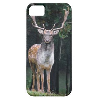 fallow iPhone SE/5/5s case
