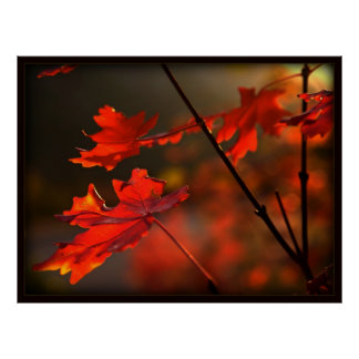 Fall's Firey Reds (with border) Poster