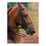 Falsa pintura de Saddlebred Postales